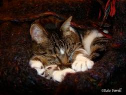GJ SHOP CAT IN BLANKET