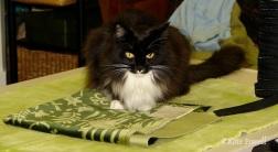 S SHOP CAT MAKES PILLOWS
