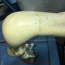 The interior lft facing front knee scarf joint line showing shrinkage and losses.